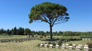 the Lone Pine, Gallipoli